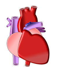 What Is The Difference Between Hypotension And Hypertension.