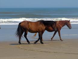 What Is Eastern Equine Encephalitis;Diagnosis,Treatment,Prophylaxis
