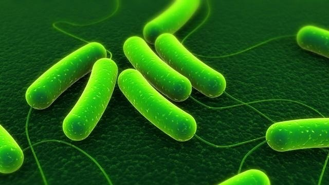 What Is Viral Meningitis;Etiology,Pathogenesis,Treatment