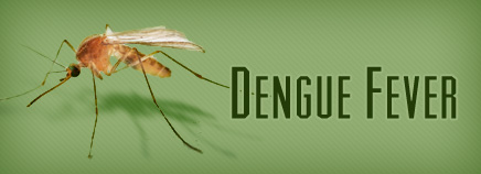 What Is Dengue Fever;Diagnosis,Symptoms,Treatment And Prevention