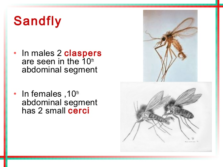 What Is Sandfly Fever (Pappataci Fever);Diagnosis,Prognosis,Treatment