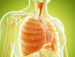 What Is The Normal Lungs Function In Human Body