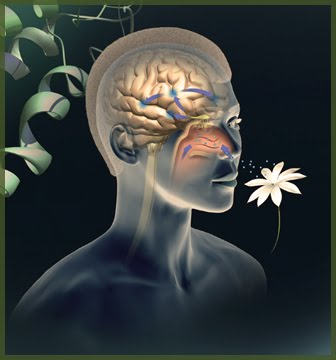 What Is Olfaction Sense;5 Facts You Must Know
