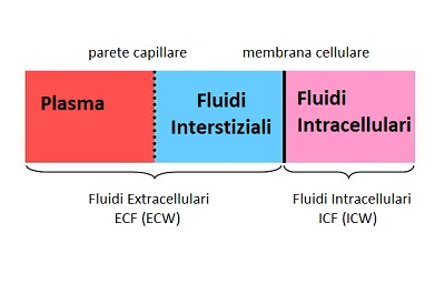 What Is Extracellular Fluid;What Does It Do In Human Body?