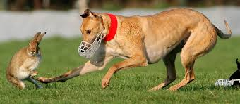 What Is Coursing;5 Facts About The Game of Coursing