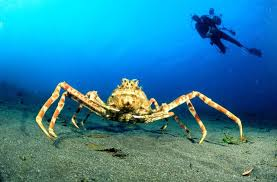 Crab, popular term applied to numerous species of decapod crustaceans, properly only to those in the div. Brachyura, but also commonly to others included in the Anomura. The true crab have short antennae, eyes which can be retracted