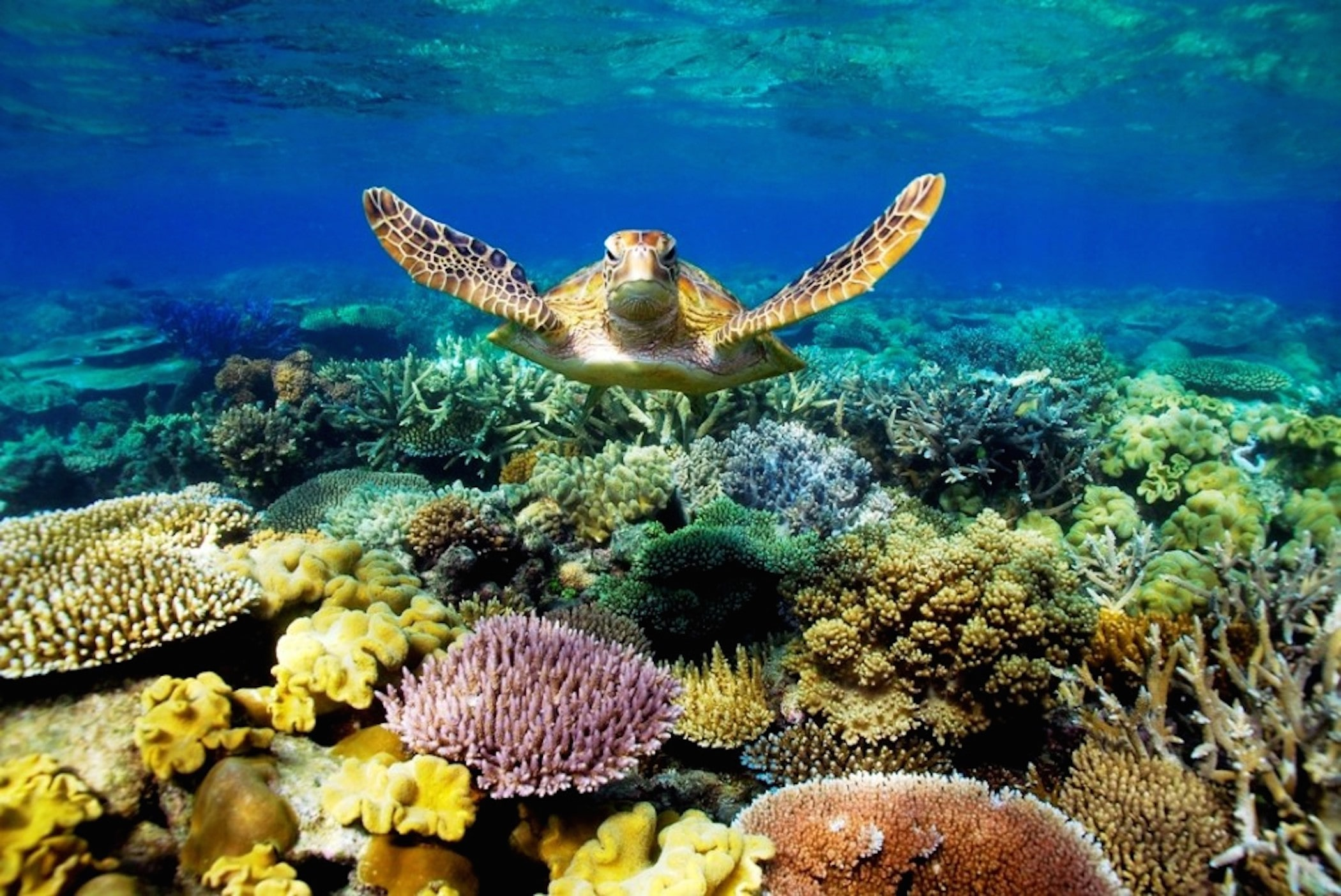 Do You Really Know What Coral Is?