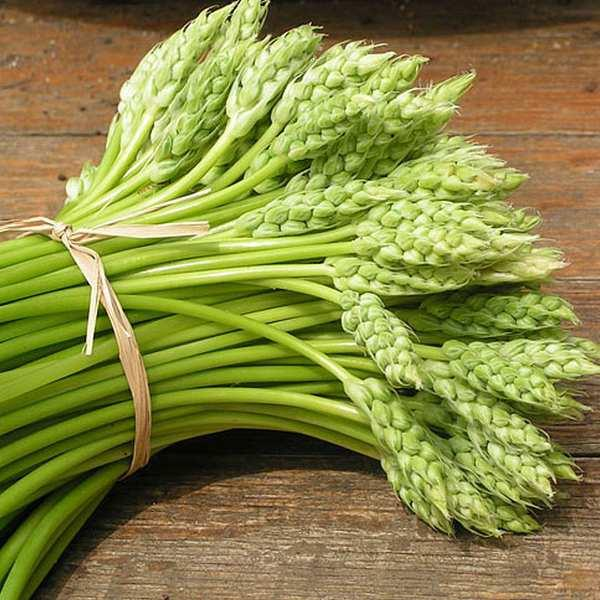 10 Quick Facts About Asparagus;You Must KNOW