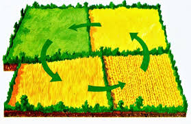 What Is Crop Rotation;Types,Benefits And Consideration