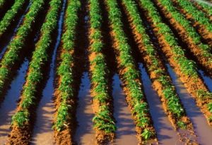 What Is Tillage In Agriculture;10 Modern Tillage Techniques