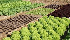 10 Types of Crop Rotation In Production Of Field