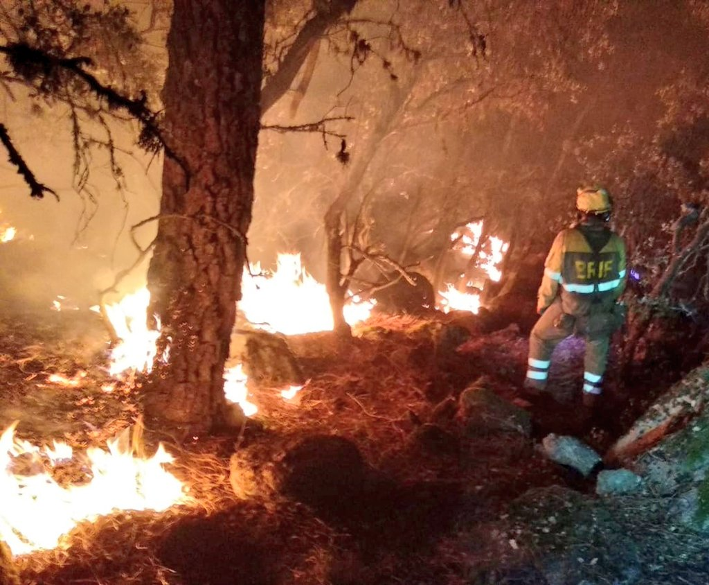 What Is Wildfires;Causes,Effects And Facts