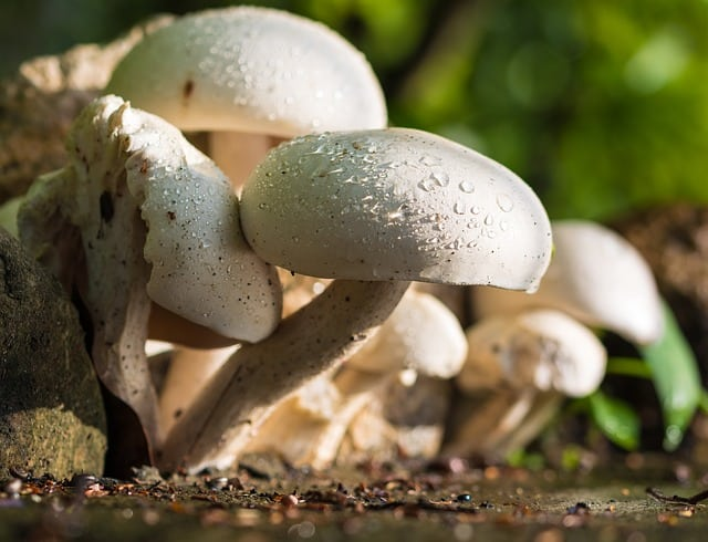 10 Universal Benefits of Mushrooms For Your Health