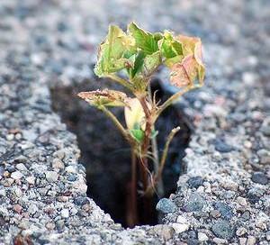 soil air