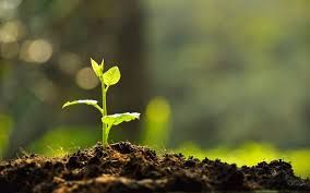 What Is The Soil,Types,Characteristics And Benefits