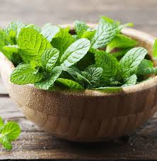 12 Peppermint Benefits For Our Health