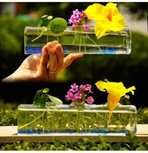 """Etymologically, hydroponics (hydroponic) is derived from the Greek words """"hydro""""meaning water and ponos means power.Hydroponics is also known assoil culture.So hydroponics is defined as the cultivation of plants that use water and without using soil as a planting medium or soilles."""